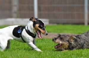 Hundebetreuung gutes Sozialverhalten